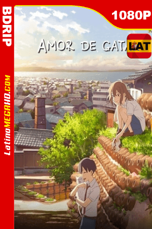 Amor de gata (2020) Latino HD BDRIP 1080P ()