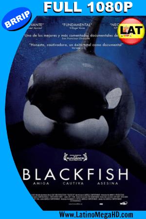 Blackfish (2013) Latino FULL HD 1080P ()