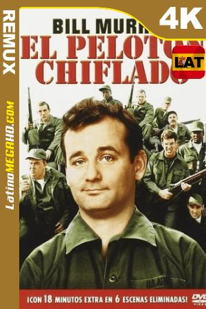 El Pelotón Chiflado (1981) Latino UltraHD BDREMUX 2160p ()