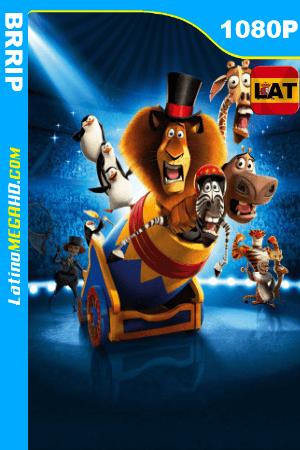 Madagascar 3: Los fugitivos (2012) Latino HD BRRIP 1080P ()